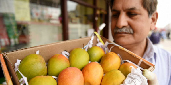 Man holding box of mangoes